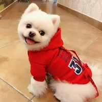 cotton pet dog clothes hooded sportswear autumn spring letter printing casual cat dogs clothing fashion puppy kitten jacket coat