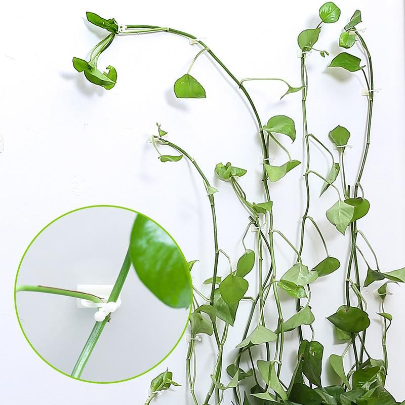 Augalinės laipiojimo sienos lipni tvirtinimo detalė, susieta - Sodo reikmenys - Nuotrauka 3