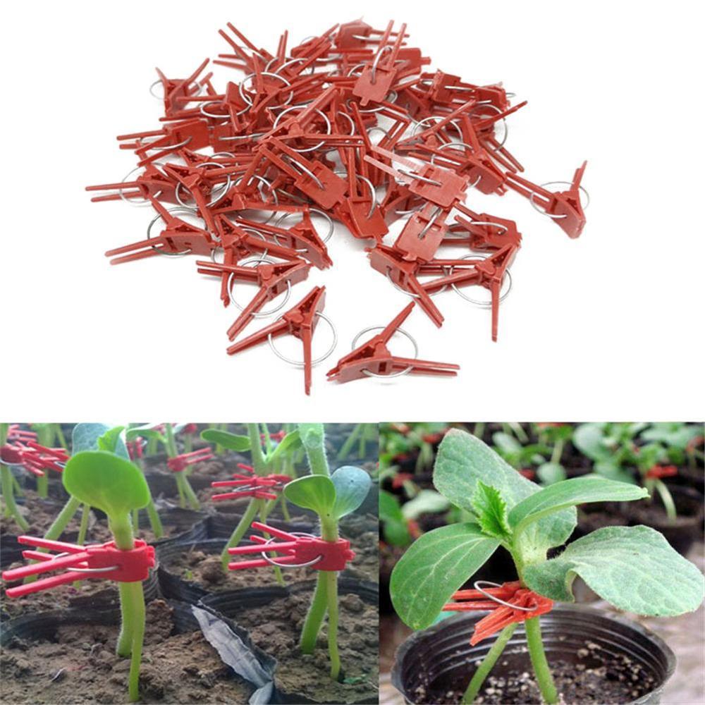 50 pçs qualidade plantas grampos de enxerto fixação de plástico fixação fixação fixação fixação braçadeira jardim ferramentas para pepino berinjela melancia