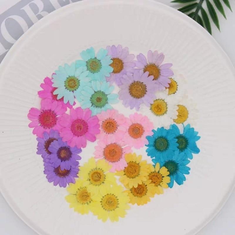 120pcs לחץ עיתונות מיובש דייזי יבש פרח צמחים עבור אפוקסי שרף תליון שרשרת תכשיטי ביצוע קרפט DIY אביזרים
