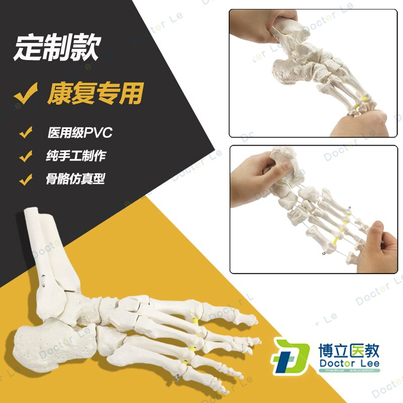 Lastest medical supplies and equipment, Life size human foot anatomy skeleton model for medical and art teaching new products plastic female pelvis anatomy skeleton model with muscle and color area for medical teaching and learning