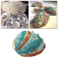 8 12cm natural rare big conch shell green turbo nautical home decor collectibles specimen stripe snail seashell wedding decor
