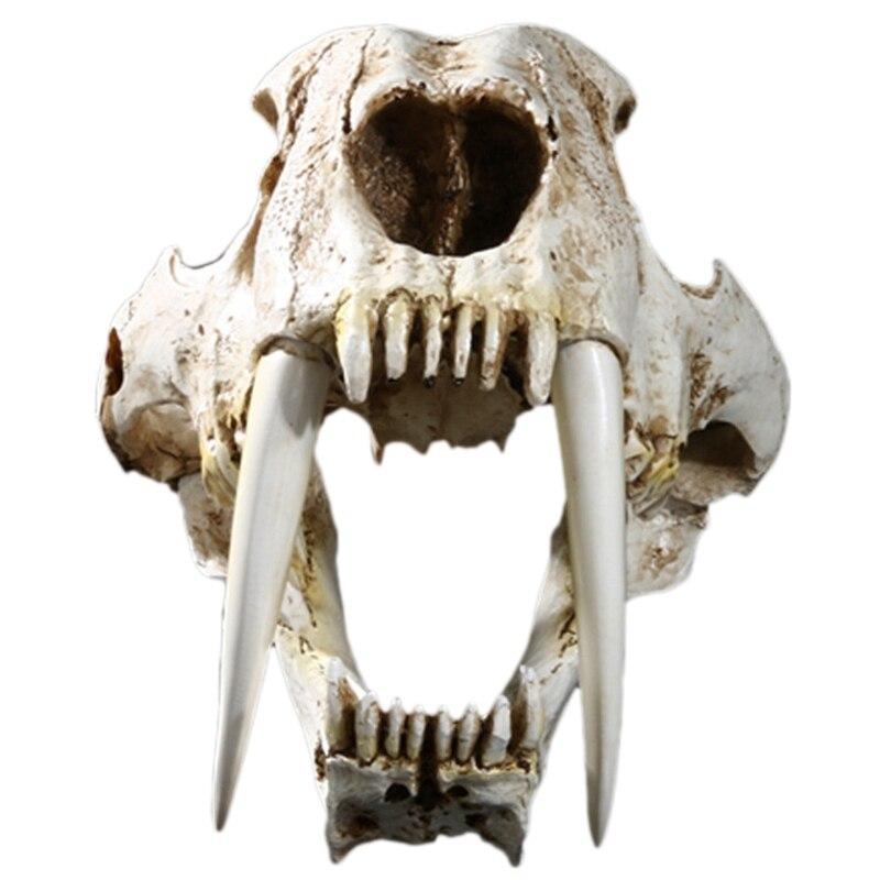 11 tamaño de animales antiguos americanos Saber diente gato Tigre calavera Sabertooth Smilodon Fatalis modelo de esqueleto Animal