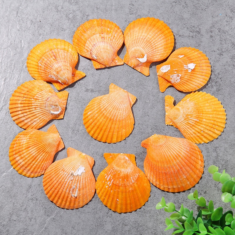 Lote de 10 unidades de conchas naturales amarillas y grandes de estilo mediterráneo, decoración creativa de conchas de abanico para acuario, conchas naturales