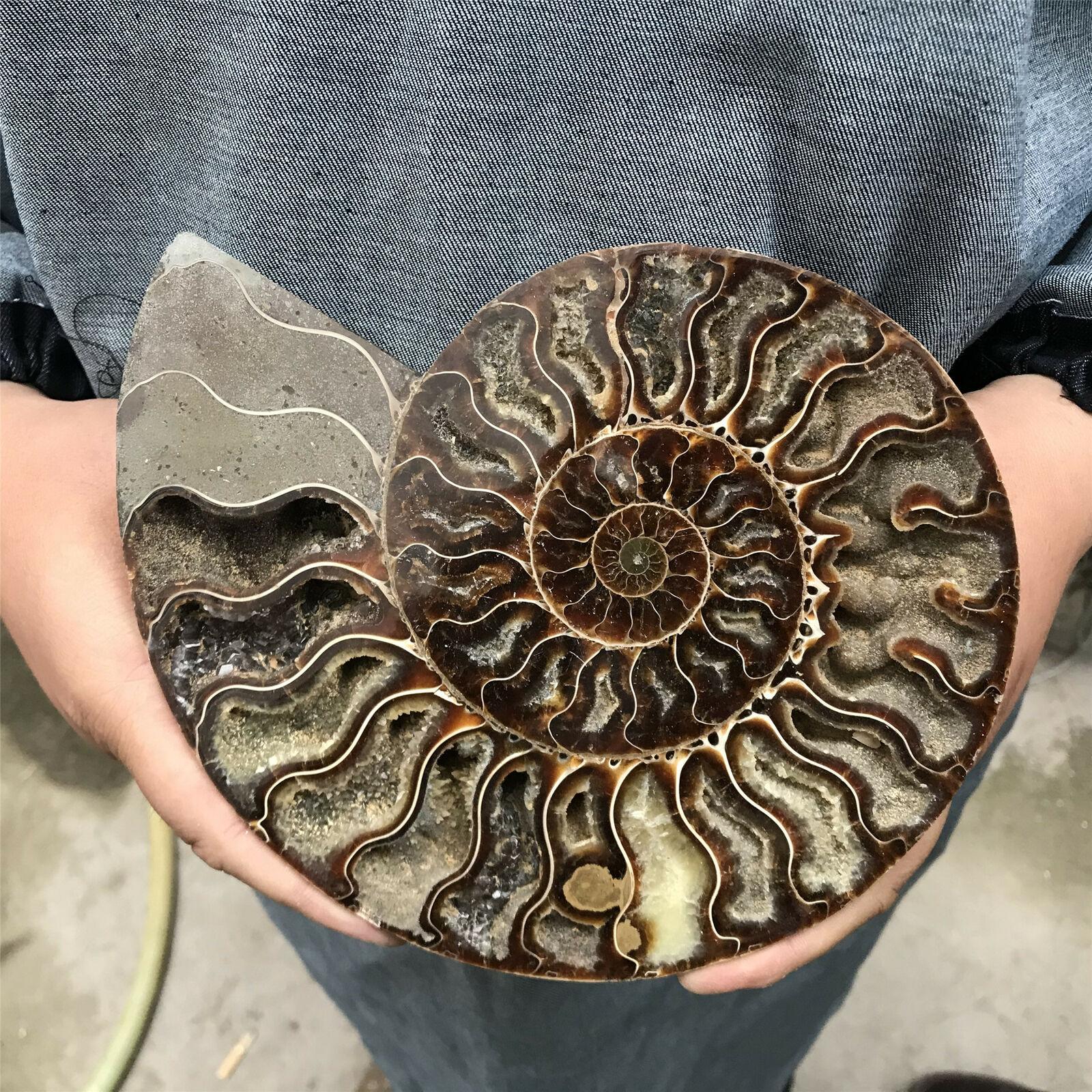 200-800g grandes fósseis de madagascar iridescente ammonite pedras naturais e minerais espécime + suporte