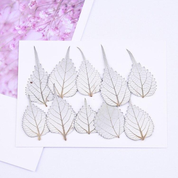 20 piezas, hojas eternas naturales frescas, hoja de ramio preservada para invitaciones de boda DIY y marco de foto artesanal marcapáginas tarjetas de regalo