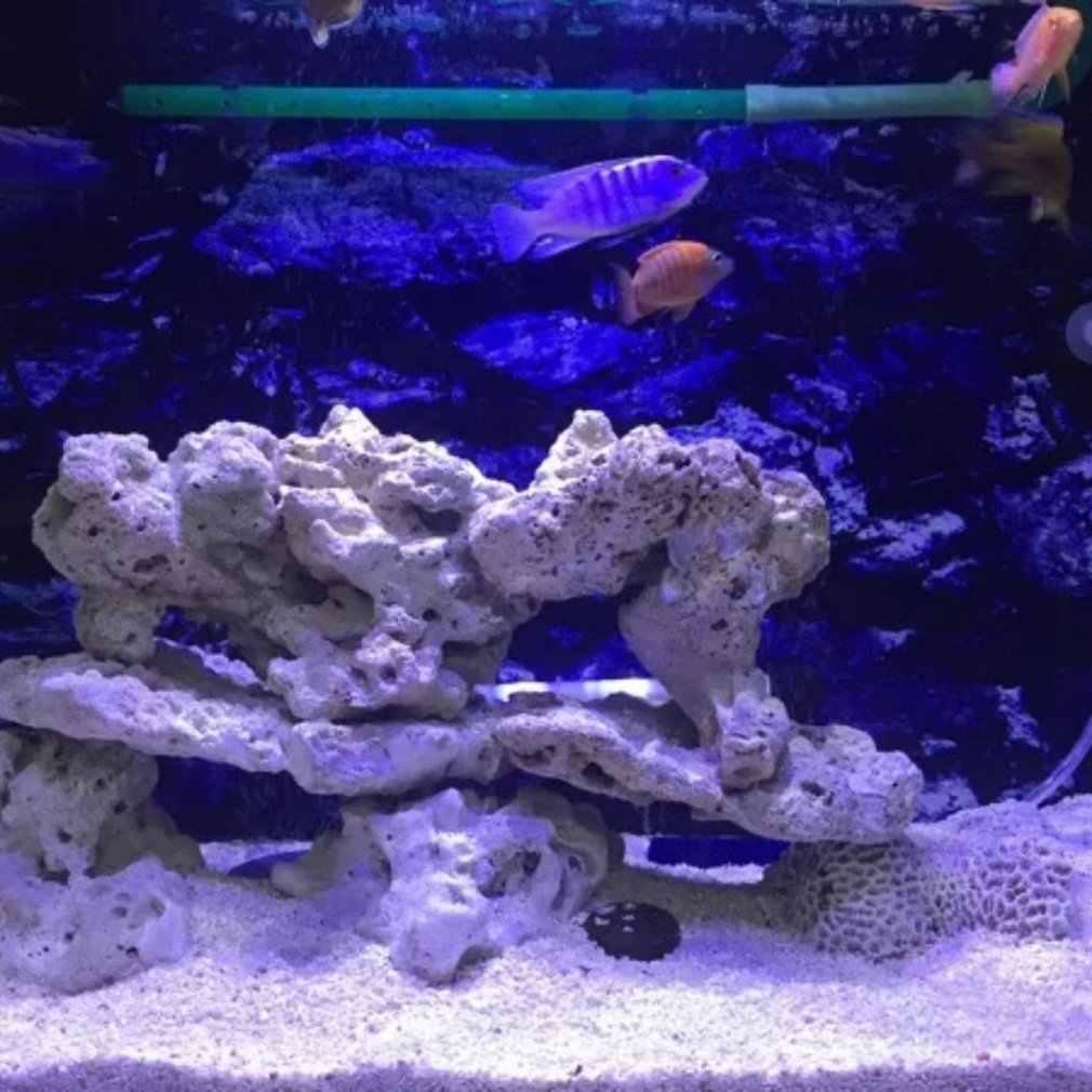 Luz Led Spectra Nano Para Acuario Iluminación De Agua Salada De 30w Con Control Táctil Para Pecera De Arrecife De Coral Enchufe Para Ue De Ee Uu Iluminación Novedosa Aliexpress
