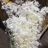 60g mini babys breath dried natural flowers preserved million babybreath bouquet dry eternell gypsophila flower home decor