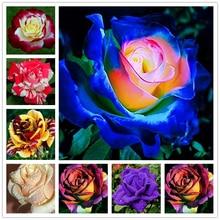 100Pcs Rare Rainbow Rose Seeds Home Nature Garden Plants Vegetable Fruits Hibiscus Sabdariffa Flower