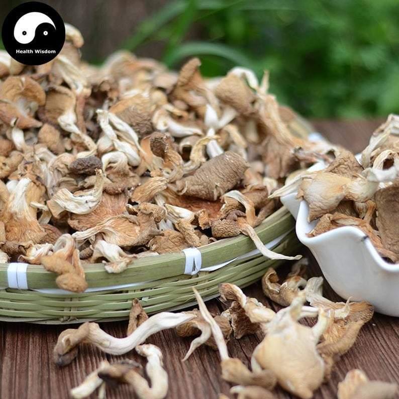 Pleurotus Ostreatus, Oyster Mushroom, Hiratake