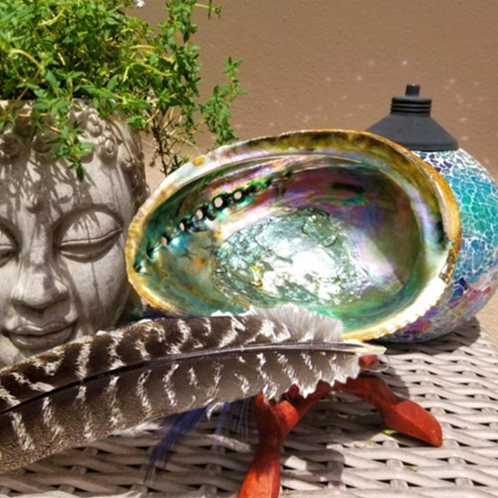 Concha de abulón Natural de 10-12Cm, conchas marinas grandes, decoración náutica, jabón,...