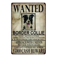 kelly66 border collie dogs wanied metal sign tin poster home decor bar wall art painting 2030 cm size