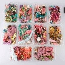 1 caja mezcla aleatoria estilo flores secas decoración Floral Natural pegatina seca belleza uñas arte calcomanías epoxi molde DIY relleno joyería