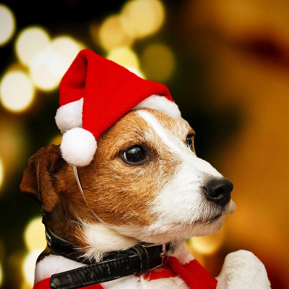 Conjunto de adornos navideños para mascotas, sombrero pequeño de felpa de alta...