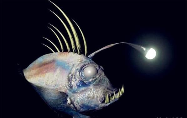 100% Original NEW SHIMANO CAIUS Baitcasting fishing reel HAGANE BODY Centrifugal brake system  3+1BB 7.2:1Ratio  kastking