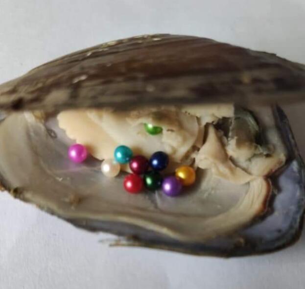3-4mm perlas de bebé 5 piezas en el interior de oyster/Akoya oyster Shell con 5 perlas de colores aleatorios SO10