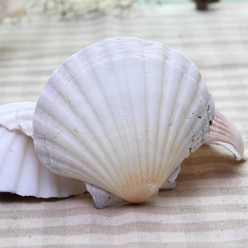 AIBEI-10-15CM Natural White Seashell 3PCS/LOT Large Scallops Wall Stickers Aquarium Home Decoration