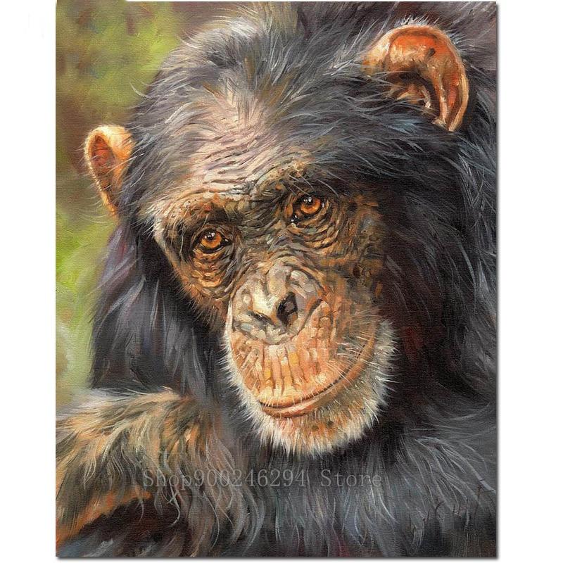 5D DIY cuadrado redondo bordado de diamantes venta ojos sabios orangután simios salvajes pintura de diamantes punto de cruz Animal decoración del hogar FF1742