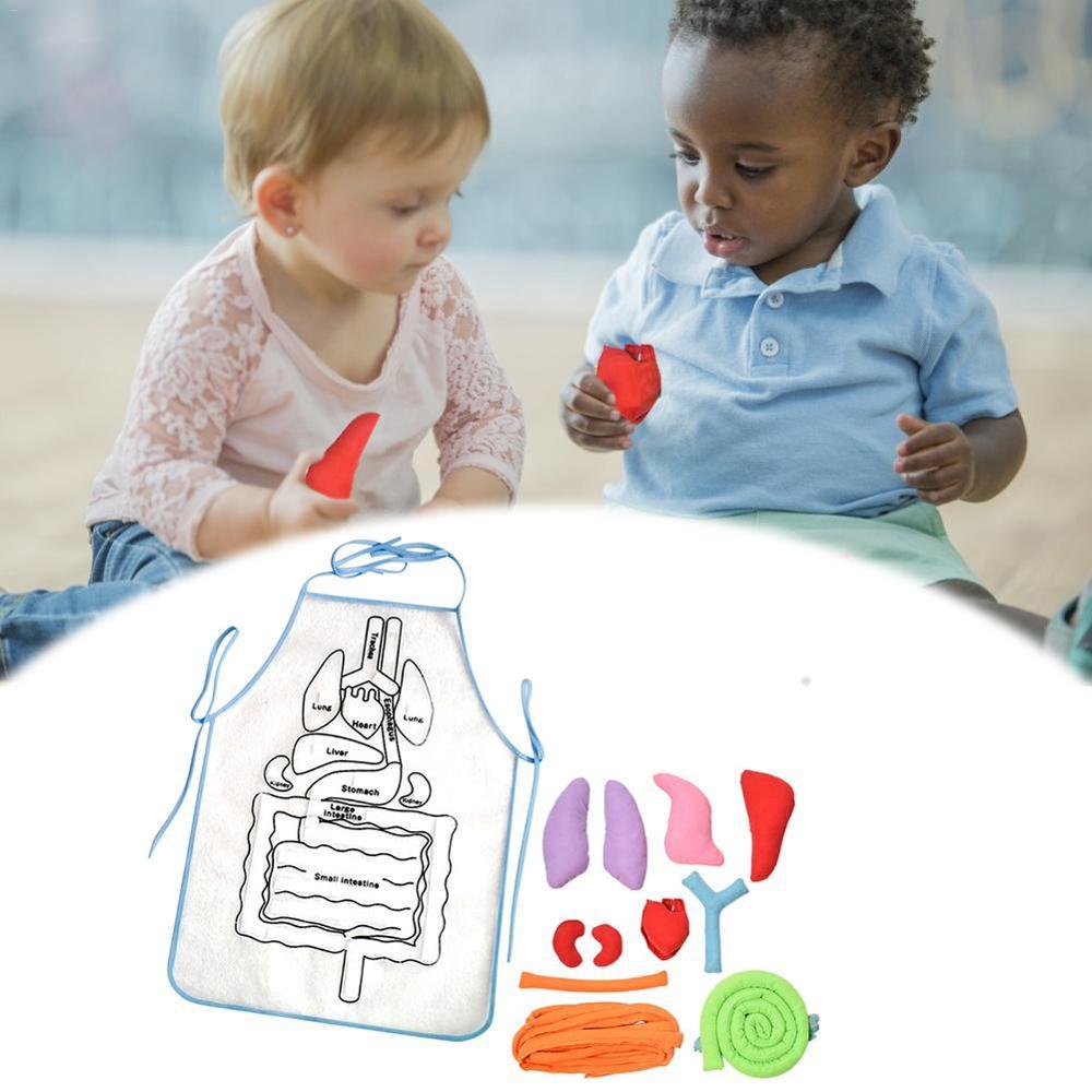 Delantal Visceral, juguetes educativos de ciencia para niños, rompecabezas para niños, delantal de anatomía, conciencia del cuerpo humano, juguetes de aprendizaje extraíbles