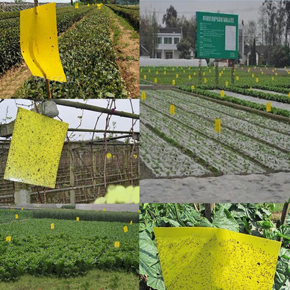 25x40cm forte flypaper pegajoso voar papel flytrap verde não tóxico eliminar mosca flycatcher captura armadilha controle de pragas
