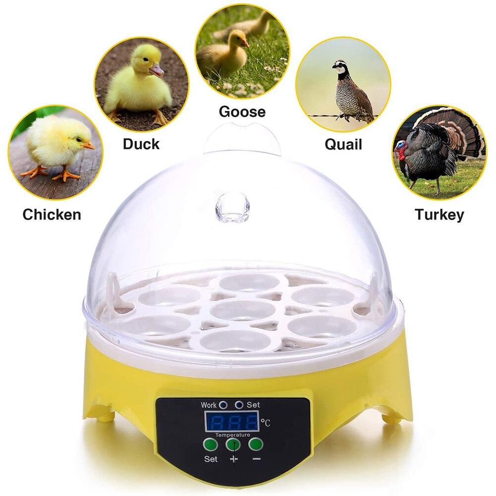 Incubadora para huevos de 7 huevos, Incubadora para aves, incubadora automática inteligente de Control de temperatura, incubadora de codornices para granja
