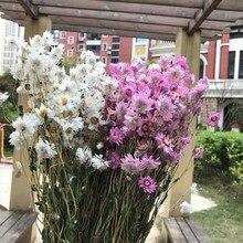Fleurs de Rudan oiseau séché 1-2.5CM/45-50g   Mini marguerite sèche, petit Bouquet de fleurs de marguerite pour décoration de la maison