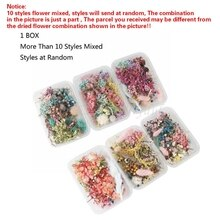 1 Box Real Pressed Flower Leaf Dried Daisy Flower Resin Flower Dry Beauty Nail Art Decals Epoxy Mold