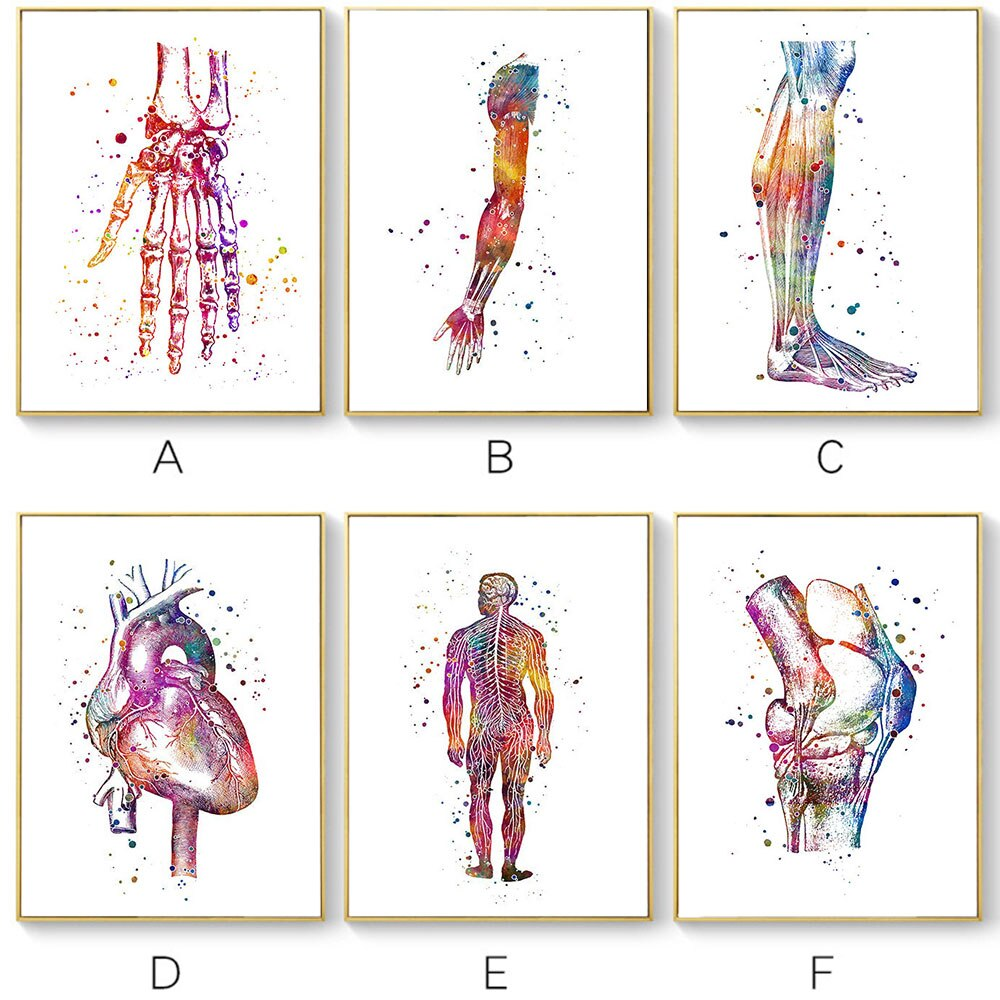 Póster anatómico abstracto, lienzo nórdico, arte de pared, color de impresión, cuadro meridiano, decoración médica sin marco