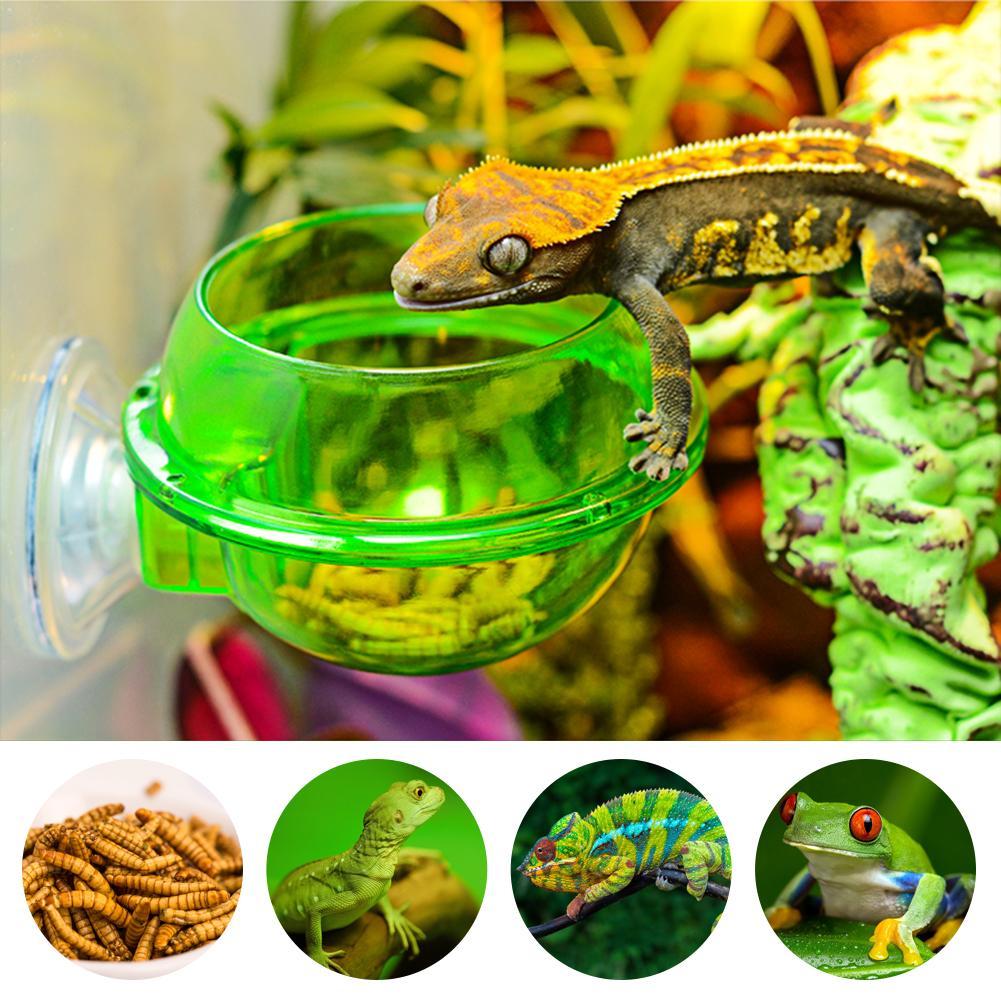 2020 NEUE Reptil Feeder Saugnapf Pet Fütterung Box Escape Proof Lebensmittel Wasser Schüssel für Spinne Eidechse Frosch Cricket Schildkröte