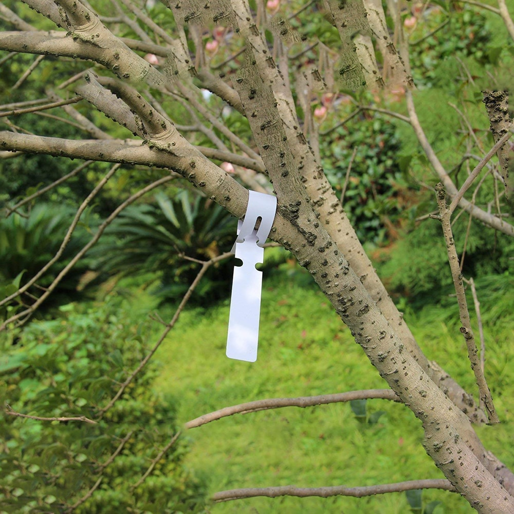 Marqueurs pour plantes en plastique PVC, marqueurs pour plantes, pour étiquette pour anneau de jardin, 21*2cm, imperméables et réutilisables