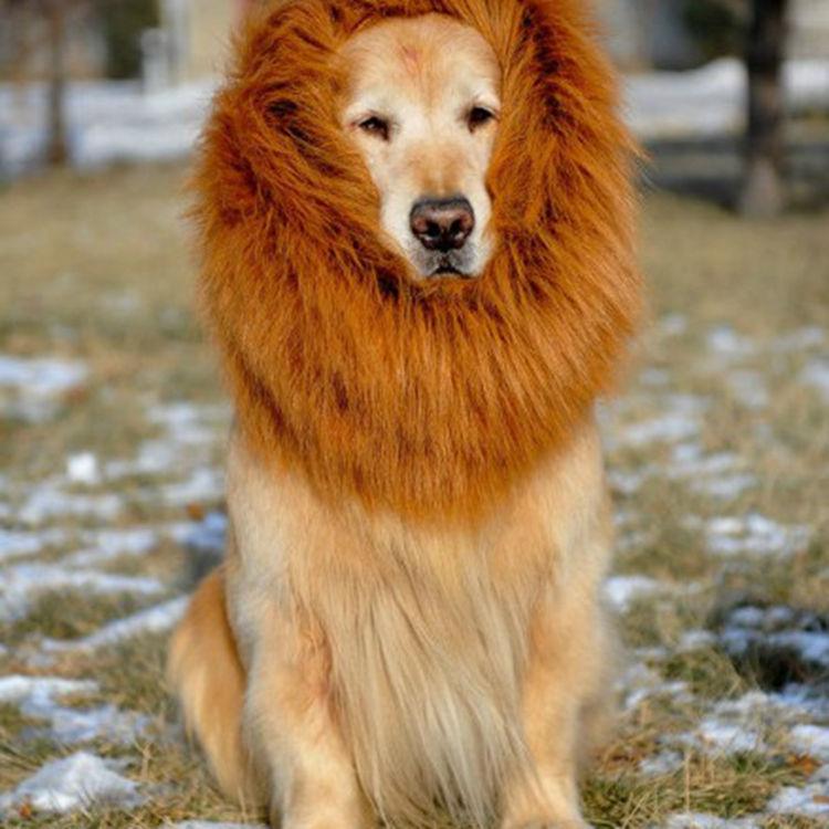Peluca para perro, productos para mascotas, suministros para mascotas de Halloween, accesorios para melena y León, accesorios para cabeza de león, accesorios para tienda de mascotas, Foto 1 unidad