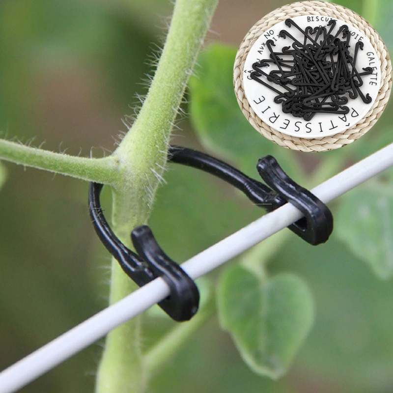 50/100 pièces vignes attache attaché boucle crochet plante légumes greffage Clips jardinage raisin Support vigne Clips fixe boucle crochet