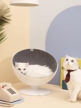 Staart Leven Kat Eigenaar Netto Rode Nest Vier Seizoenen Algemene Huis Zomer Kitten