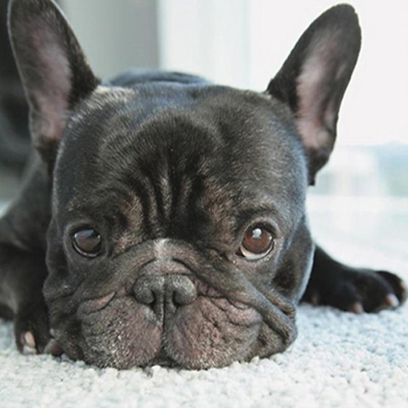 5D Diy pintura de diamante punto de cruz pequeño perro negro cabezas de diamante completo bordado francés Bulldog redondo diamante cachorro