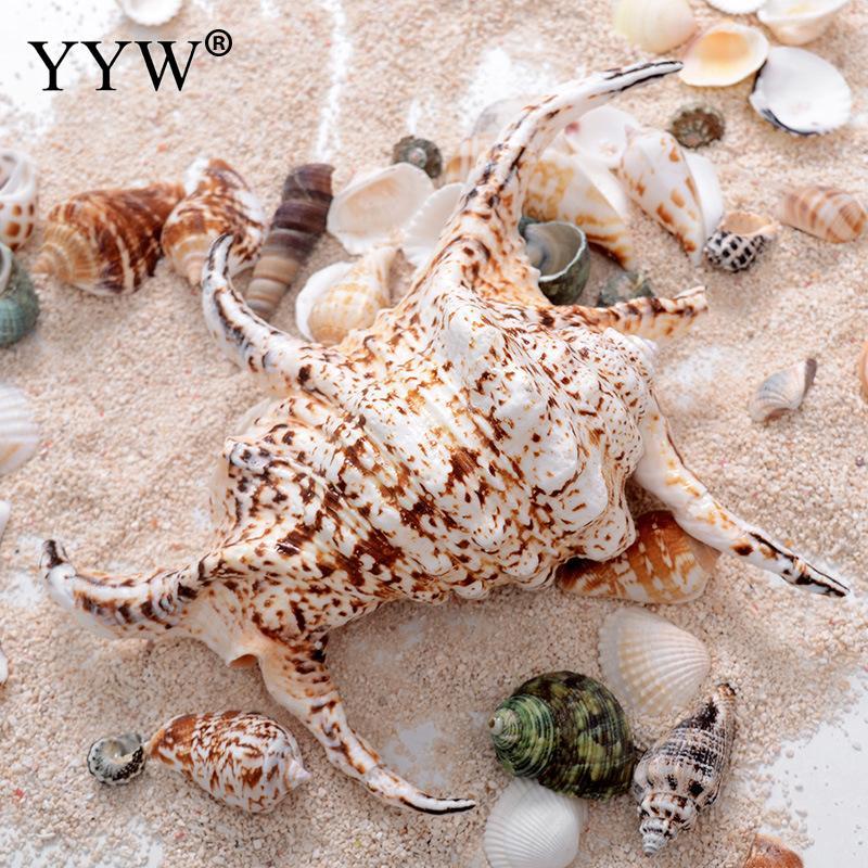 Conchas de mar naturales Schelpen Coquillage Conchas de playa marinas decoración del hogar Conchas de mar decorativas accesorios de decoración de concha de mar