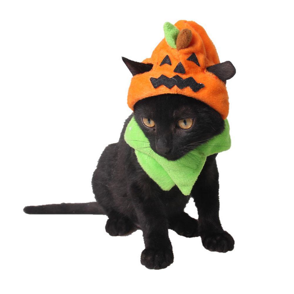 Трюк или лечение тыква шляпа для Хэллоуина принадлежности кошек и