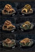 Mini Turtle Model Common Box Turtle Osceola Wild Animal Collector Toys Crafts Souvenirs Gift Doll Car Tea Table Decor Original