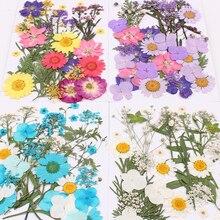 10 sortes choisir Nail Art décoration fleur séchée 3D manucure vernis été réel préservé Floral feuille mixte sec floraison conseils