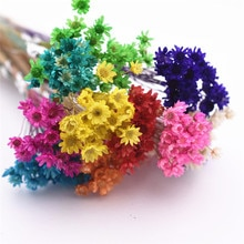 30 штук, милые маленькие маргаритки, Натуральные сушеные цветы, декоративные поделки, стеклянный глобус, наполнитель для силиконовой формы, ювелирное изделие, сделай сам