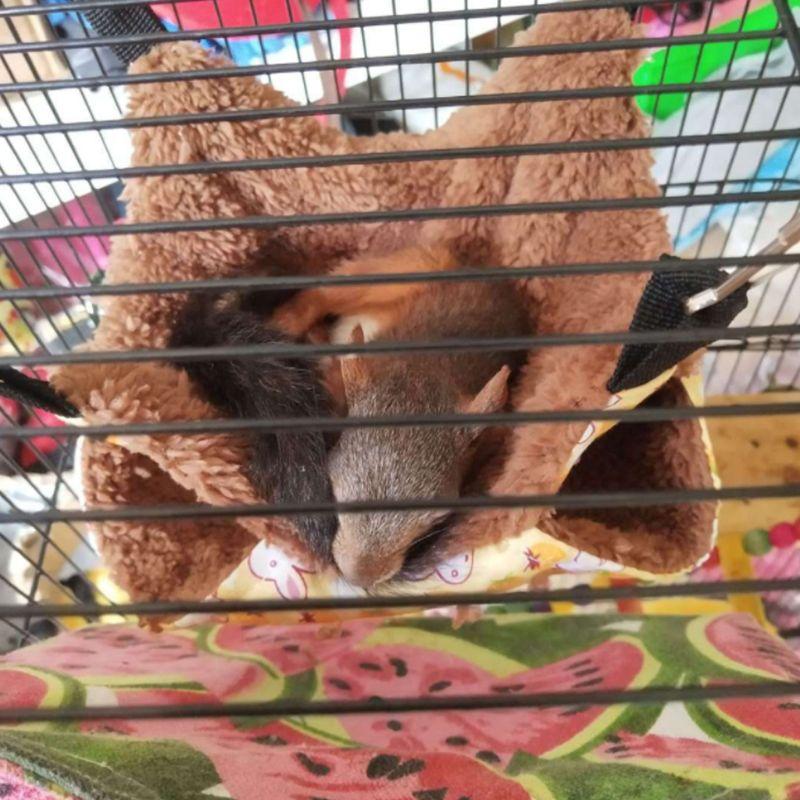 Viseča mreža za hišne ljubljenčke dvoslojna plišasta mehka zima - Izdelki za hišne ljubljenčke - Fotografija 3