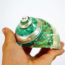 Polishing Stripe Green Turban Natural Shell & Conch Fish Tank Aquarium Landscaping Ornaments Wedding Home Decoration Great Gift