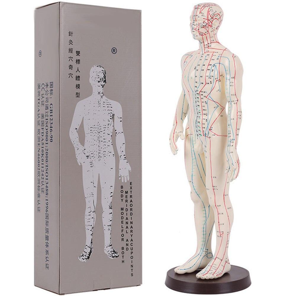 Acupuntura modelo 50cm macho hembra con Base humana modelo meridianos de acupuntura Kit de Inicio de acupuntura