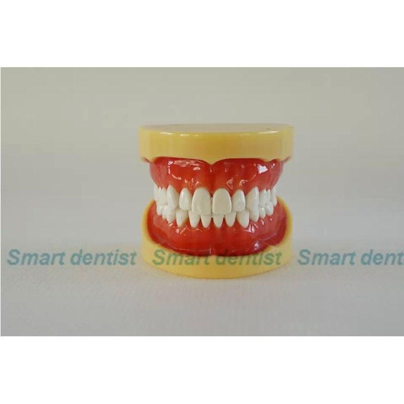 Modelo padrão da mandíbula do dente da goma macia c, cada dentes removíveis, modelo dental, educação, medicina