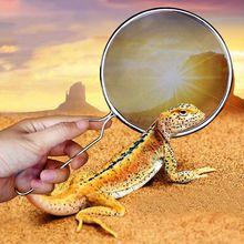 Reptile sable pelle tamis filtre inox Scoop Animal de compagnie caisse nettoyage
