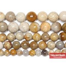 """شحن مجاني الطبيعية أقحوان حجر المرجان الحفريات مستديرة فضفاض الخرز 15 """"ستراند 4 6 8 10 12 مللي متر اختيار حجم"""