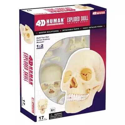 4D белая голова Скелет собранный скелет модель бесплатная доставка