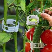 50/100pcs 30mm פלסטיק צמח תמיכה קליפים עבור עגבניות תליית סבכת גפן מתחבר חממת צמחים ירקות גינה קישוט