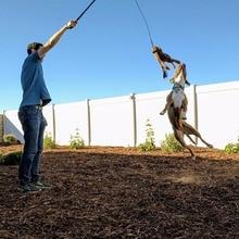 1 szt. Wysuwany pies szczeniak Teaser słup różdżka odkryty interaktywny pies Flirt Pole szkolenia lina do ćwiczeń zabawka
