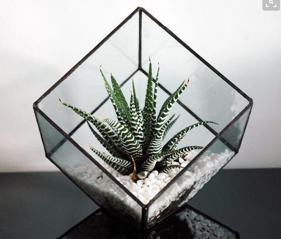 Kit de Terrario de cristal de soldadura con forma de cubo para plantas, jarrón creativo de flores, macetas de cristal para decoración de bodas y jardín de casa