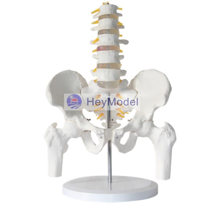 Modelo HeyModel de columna Lumbar con pelvis y fémur, disco intervertebral, pelvis modelo five lumbar spine